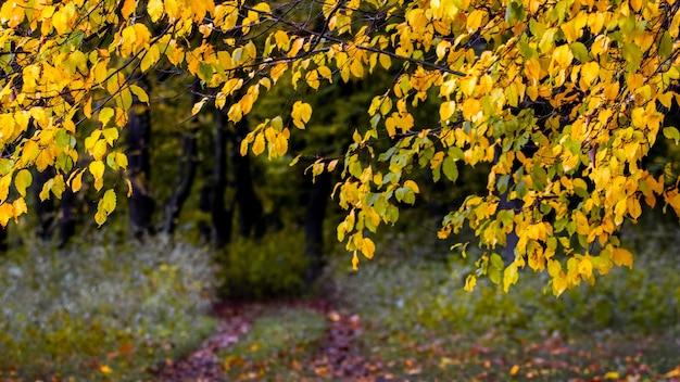 Estrada na floresta entre as árvores com folhas amarelas de outono