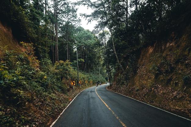 Estrada na floresta, estação das chuvas, árvores naturais e nevoeiro