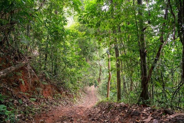Estrada na floresta para viagens de carro off-road na natureza.