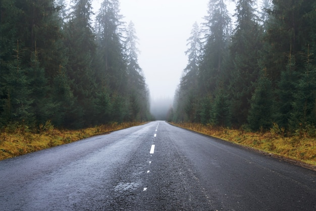 Estrada na nebulosa floresta de outono. paisagem da estrada de asfalto vazia, árvores altas, grama amarela e névoa nas montanhas.