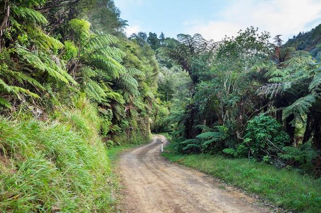 Estrada na selva remota da nova zelândia