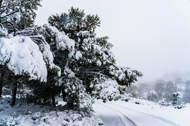 Estrada nevada difícil de alcançar com neve empilhada nas árvores.
