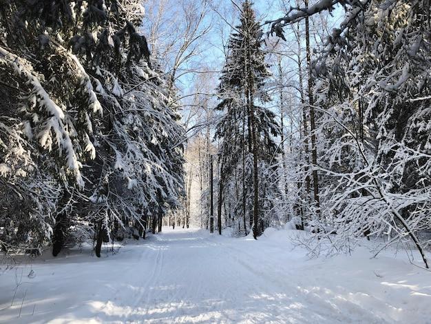 Estrada nevada entre os abetos na floresta de inverno