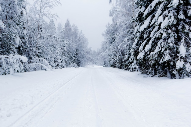 Estrada nevada na floresta de inverno, bela paisagem gelada, rússia