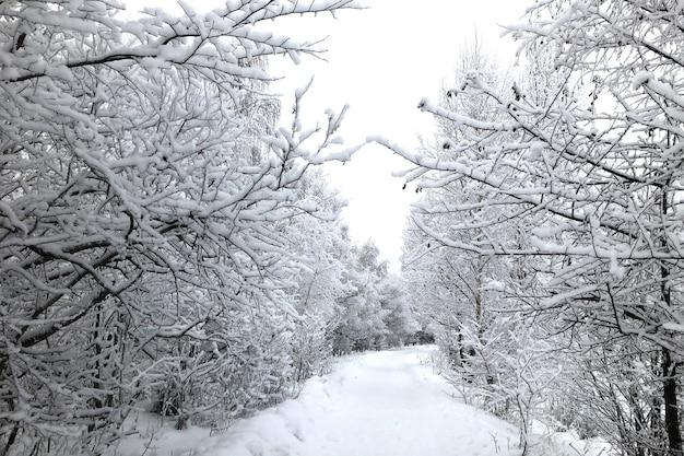 Estrada nevada na floresta de inverno com árvores cobertas de neve após a queda de neve