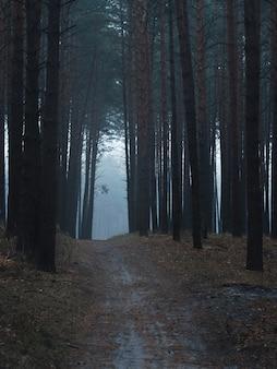 Estrada nevoenta escura mística na floresta de pinheiros