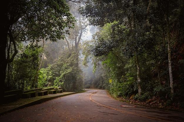 Estrada nevoenta mística na selva brasileira.