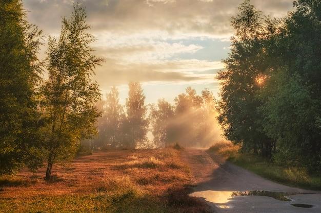 Estrada no campo no início da manhã com raios de sol perto da floresta de outono