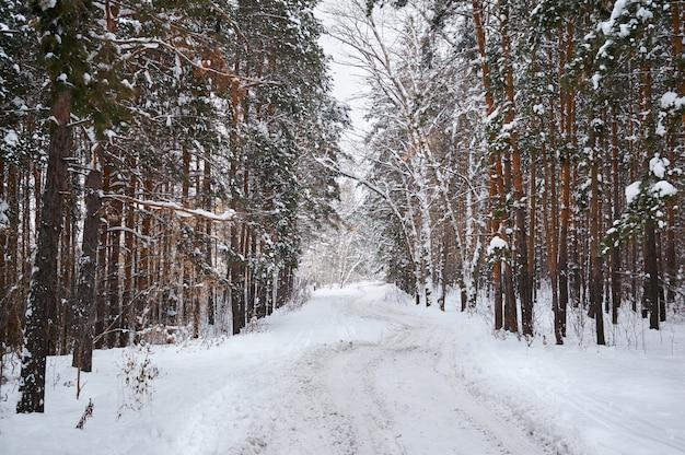 Estrada no inverno com floresta coberta de neve