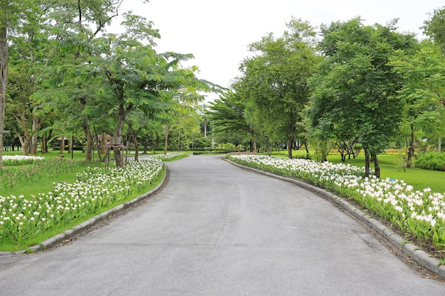 Estrada no jardim do verão com flor e árvore ao redor lá.