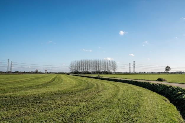 Estrada no meio de um campo gramado com árvores sem folhas à distância sob um céu azul