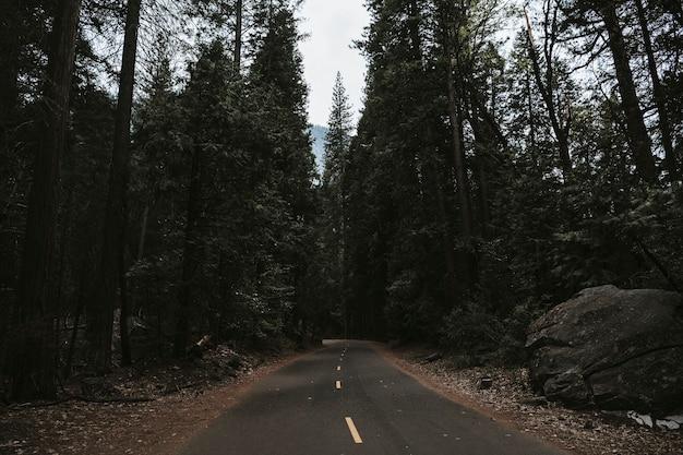 Estrada no parque nacional de yosemite na califórnia, eua