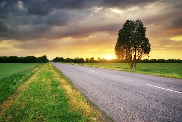 Estrada no prado
