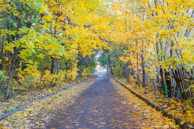 Estrada para a floresta de outono