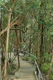 Estrada para caminhar pela selva densa.