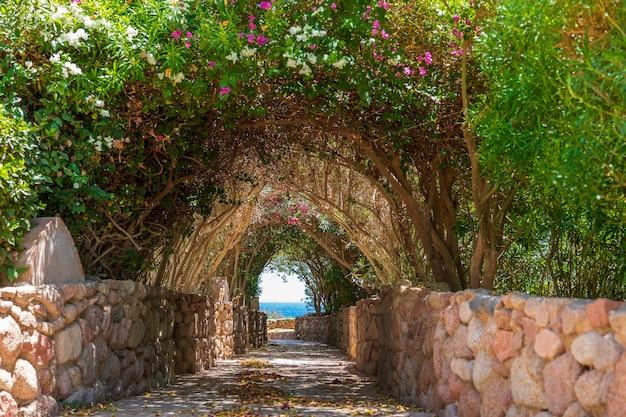 Estrada para o mar através de um túnel com flores coloridas na cidade turística de sharm el sheikh, no egito