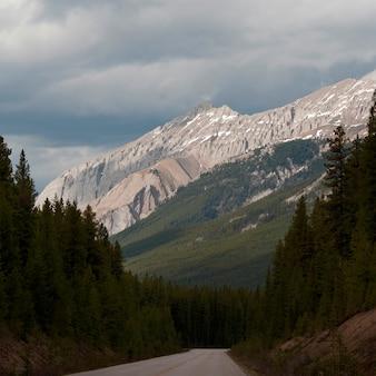 Estrada, passagem, um, floresta, maligne, lago, estrada, jasper parque nacional, alberta, canadá