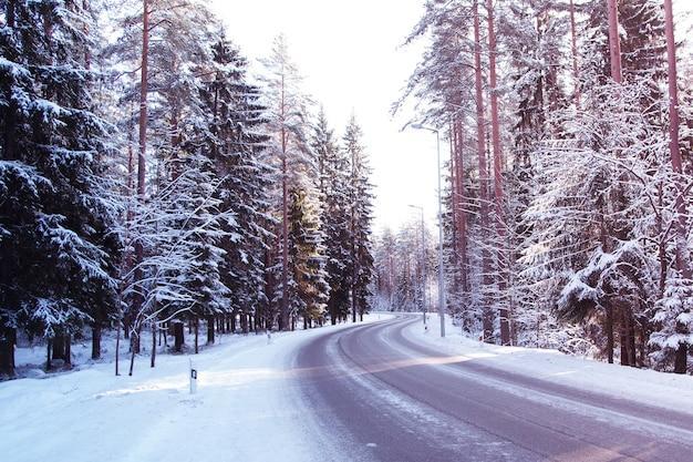 Estrada pela floresta de neve