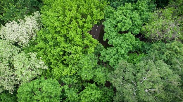 Estrada pela floresta verde de verão, vista aérea