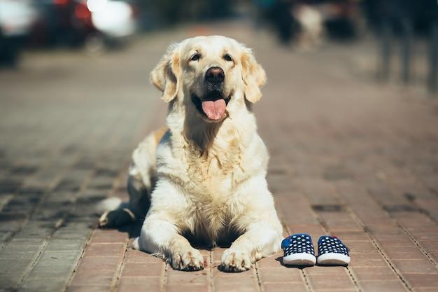 Estrada pobre cão vadio engraçado