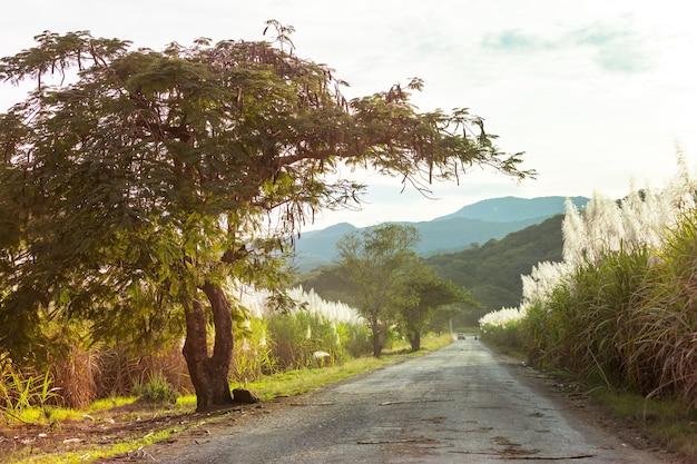 Estrada rural ao longo de campos de cana-de-açúcar nas montanhas, méxico