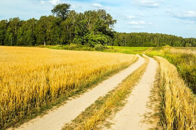 Estrada rural através de um campo de trigo indo