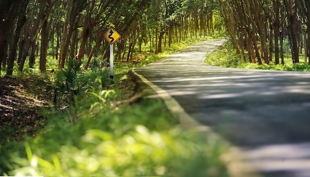 Estrada rural através do túnel da árvore.