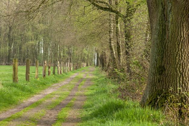 Estrada rural com bétulas na holanda