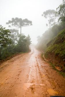 Estrada rural de terra molhada - lama - com névoa