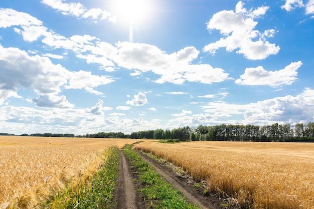 Estrada rural em campo de trigo e céu nublado