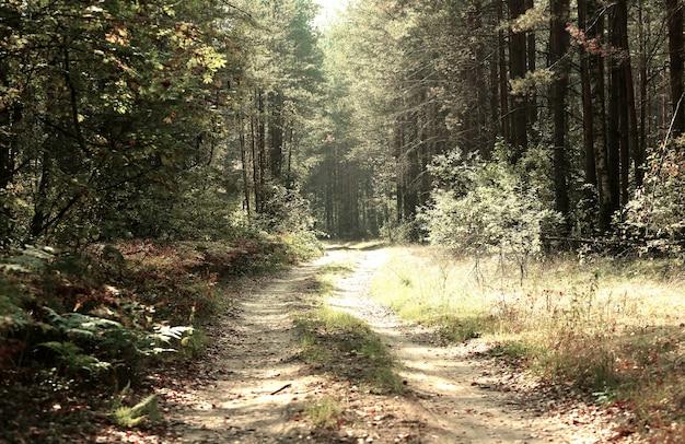 Estrada rural em um bosque