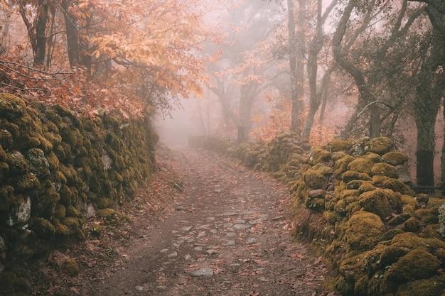 Estrada rural envolta em névoa perto de montanchez. espanha.