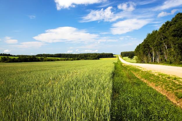 Estrada rural não pavimentada no verão