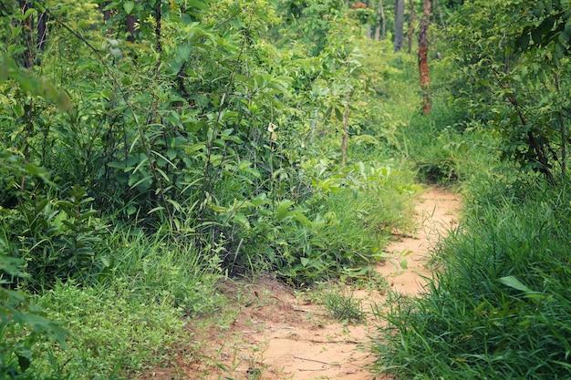 Estrada rural para a floresta com árvores.