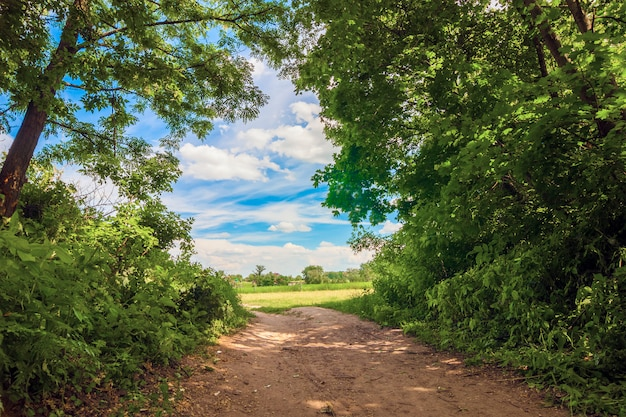 Estrada rural perto de árvores verdes em um dia ensolarado de verão