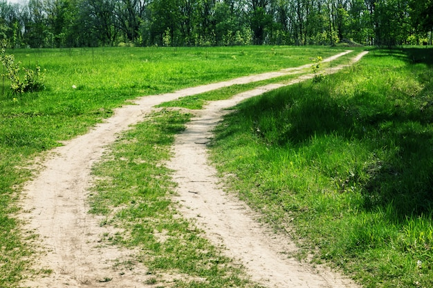 Estrada rural sinuosa para floresta em dia de verão