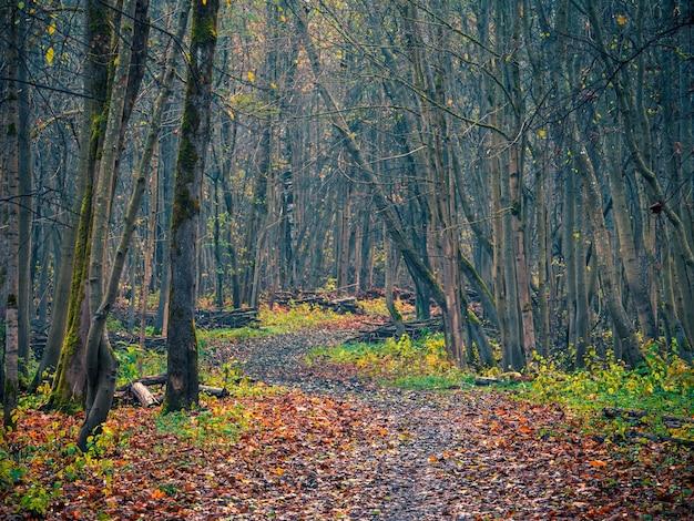 Estrada sinuosa através da floresta nublada de outono de manhã.