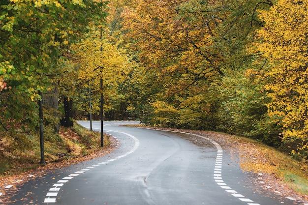 Estrada sinuosa cercada por árvores cobertas por folhas coloridas no outono