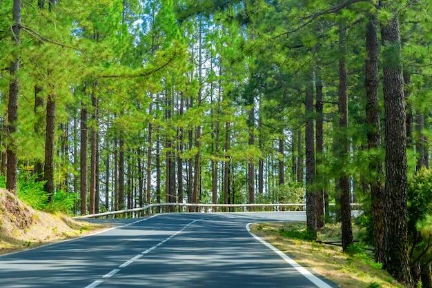 Estrada sinuosa em uma floresta de montanha