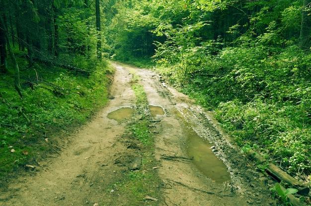 Estrada suja com grandes poças em uma floresta verde de verão