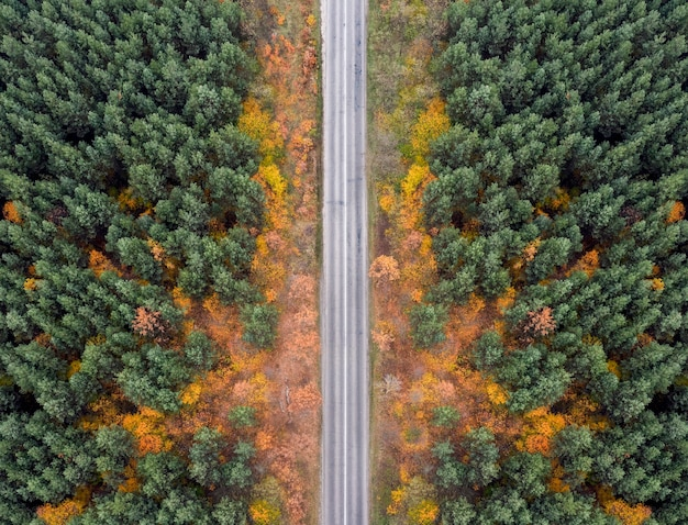 Estrada vazia na floresta de outono de uma vista aérea.