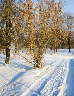 Estrada vazia na floresta no inverno