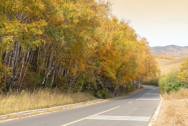 Estrada vazia passando por floresta de folhagem de outono no outono