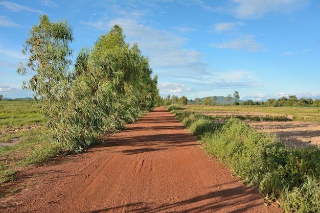 Estradas de terra na tailândia rural com uma árvore
