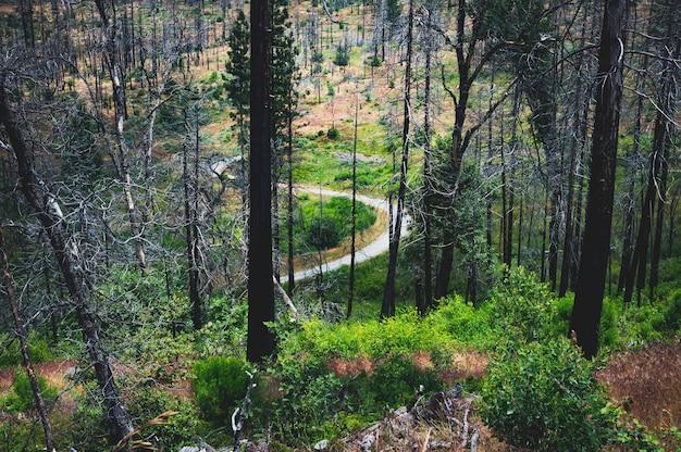 Estreito pequeno rio curvilíneo em uma floresta