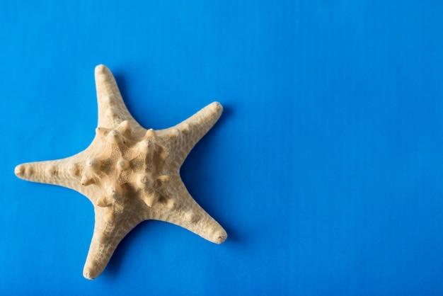 Estrela do mar amarela grande na parede azul com espaço da cópia