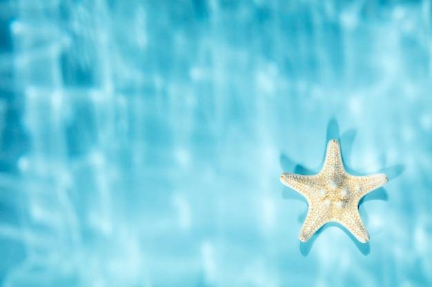 Estrela do mar branca em fundo azul com sombras rasgadas subaquáticas, vista de cima, espaço de cópia