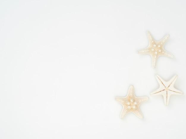 Estrela do mar colocada separadamente em um fundo branco, espaço para mensagens de texto, vista superior