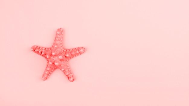 Estrela do mar coral pintada no fundo rosa