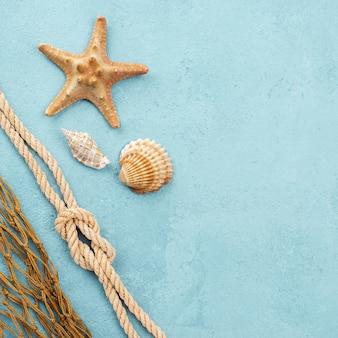 Estrela do mar e conchas com cópia espaço